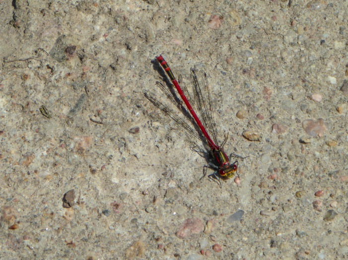 Up week 3 Dragonfly