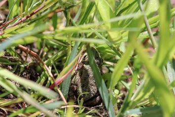 Up week 3 Frog