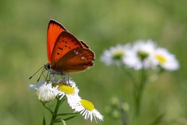 UP week 7 butterfly