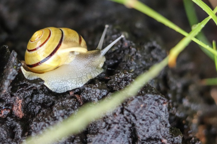 UP week 4 Snail