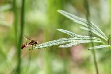 UP week 4 Wasp
