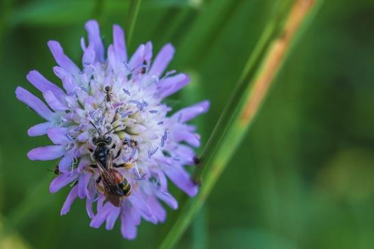 UP week 7 Flower