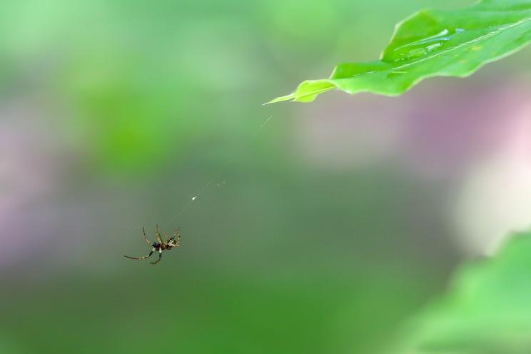 UP week 4 Spider