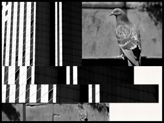 UP week5 Bird