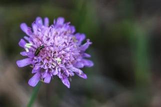 UP week 12 Flower