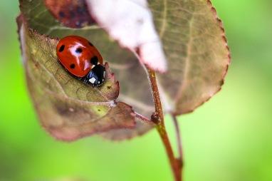 UP week 10 Ladybug
