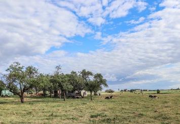 UP week 9 Farm