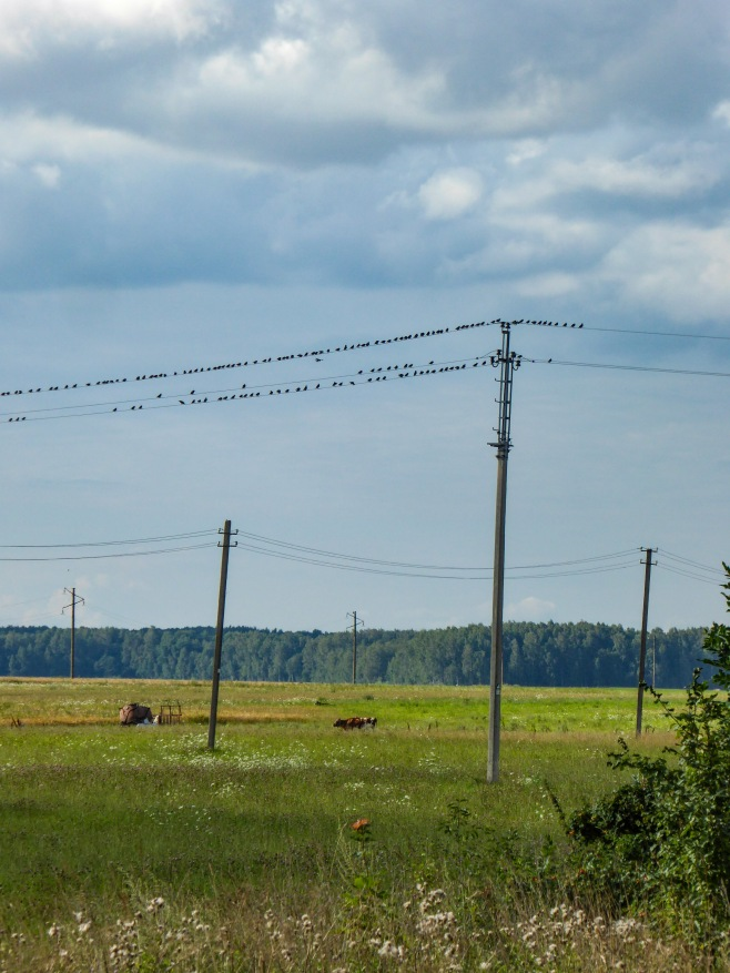 UP week 12 Birds