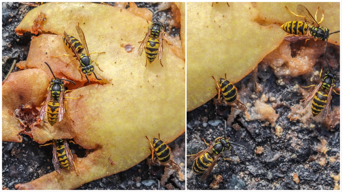 UP week 18 Wasp fest