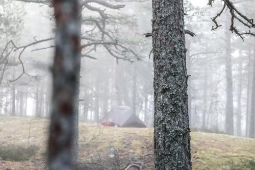 UP week 18 mist