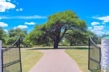 Calden tree [Prosopis caldenia]